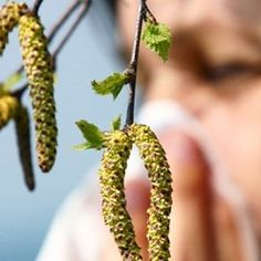 Pollensäsongen är här trots minusgrader. 😮 Har du känt av den? #pollen #vår #snuva #allergi #pollenallergi #vardagspuls