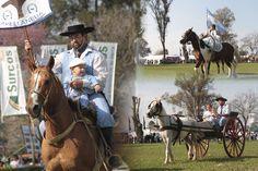 Domingo2 Horses, Exhibitions, Events, Animales, Horse