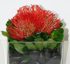 This is a cube vase floral arrangement that features red pin cushion protea atop black river rocks.  See our entire selection at www.starflor.com.  To purchase any of our floral selections, as gifts or décor, please call us at 800.520.8999 or visit our e-commerce portal at www.Starbrightnyc.com. This composition of flowers is generally available for same day delivery in New York City (NYC). SQ097