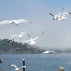 #nofilter #warrnambool #Australia #Victoria #seamist #rollingin #clouds #sky #gorgeous #instadaily #landscape #boatramp #birds #fly #soar #seagull #flight #lovemylife by sh86mummalette