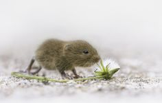 First Outing for Mr. Vole by Kris Bell on 500px