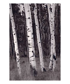 Aspen Forest like the Grove at Black Butte