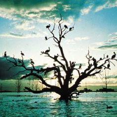 Lake Naivasha, Kenya - Born Free indeed.