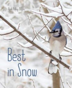 Best In Snow  (Book) : Sayre, April Pulley : Discover the wonderful world of snow with this companion to the celebrated Raindrops Roll !  With gorgeous photo illustrations, award-winning author April Pulley Sayre sheds sparkly new light on the wonders of snow. From the beauty of snow blanketing the forest and falling on animals' fur and feathers to the fascinating winter water cycle, this nonfiction picture book celebrates snowfall and the amazing science behind it.