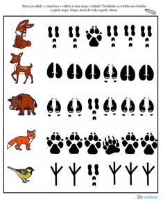 Preschool Learning Activities, Animal Activities, Preschool Science, Woodland Animals Theme, Forest Animals, Animal Footprints, March Themes, File Folder Activities, Animal Tracks