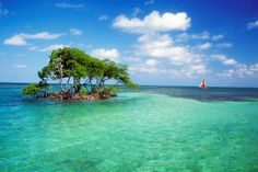 Our photo of the day was taken in Caye Caulker, Belize, Mangrove Island. Best Places To Retire, Oh The Places You'll Go, Places To Travel, Places To Visit, Beautiful World, Beautiful Places, Belize Vacations, Belize Travel, Honeymoon Destinations
