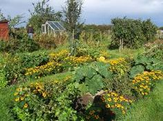 Image result for allotment garden