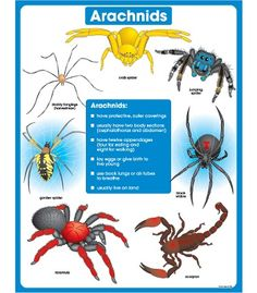 Animal life cycles free collection of pictures of the water cycle
