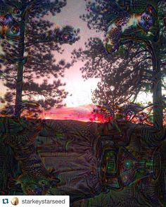 #Repost @starkeystarseed  Sunset trip   #dreamscope #deepdream #computertrip #lsd #life #crystals #fractals #beauty #wonder #true #simple #filter #pikespeaklivin #pikenationalforest #coloradolife #coloradohigh #coloradolivin #beautiful by google_deep_dream
