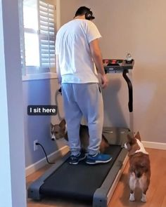 Corgi Funny, Funny Dog Memes, Funny Dogs, Hilarious Sayings, Dog Humor, Cute Little Animals, Cute Funny Animals, Funny Cute, Cute Animal Videos