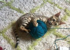 Yarn? I freakin love yarn!!! http://ift.tt/2pBjfBj