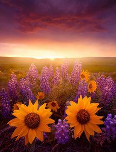 .belle fleur.