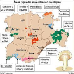 La lluvia y el fresco abren la puerta a las setas  La Comunidad cuenta con la mayor área de recolección micológica regulada de toda Europa, con más de 412.000 hectáreas