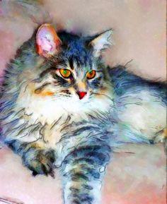 CATS~ Stunning Multi-Coloured Cat Portrait