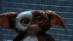 Hollywood rumors about a new Gremlins movie have been cropping up for some time. But will Mogwai, Gizmo & Gremlins 3 actually be on screens in the near future? The Gremlins franchise, sitting neatly on a. Les Gremlins, Gremlins Gizmo, 1990s Tv Shows, 3 Movie, Weird Creatures, Film Books, Reaction Pictures, Horror Movies, 80s Movies