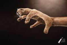 """その行為は自らの肌を野獣の牙にさらすのと同じ行為です。比喩が巧みなプリント広告。・オオカミ編 ・クマ編 """"人の手""""がクーガーやオオカミ、クマになっているというビジュアル。それぞれ今まさに牙を剥き出しにし、爪を立てて獲物に襲いかかろうとする獰猛な様子が伝わってきます。 コピーは…""""When itching attacks""""(痒みが襲って来た時に) 耐えがたい痒みに襲われた時、患部を自らの爪でかきむしるという行為はよくやってしまいがちですが、その行為を""""獰猛な獣に患部を傷つけさせていることに他ならないこと""""だと訴え、""""だからこそDermotriad+のかゆみ止めを使って、かゆみを抑えて対処くださいね""""と表現"""