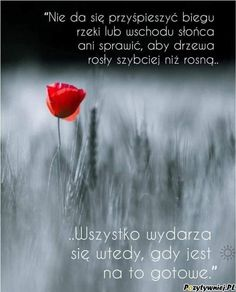 Dad Day, Beautiful Roses, Quotes, Inspiration, Positive Sayings, Good Morning, Quotations, Biblical Inspiration, Quote