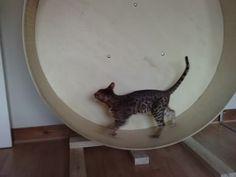 Oh Yes!  Daisy and Tigger need this!  DIY Cat Wheel