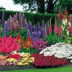 18 best flower garden ideas for the backyard that can bring a beautiful view through colorful flower or mix with various green plants.