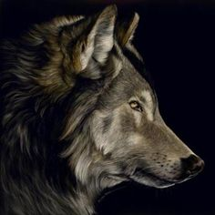Profile of a Wolf - Sally Maxwell, master scratchboard artist