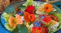 Připravte si z ní bylinnou tinkturu! Interior Design Living Room, Herbs, Backyard, Gardening, Table Decorations, Flowers, Diy, Home Decor, Fitness