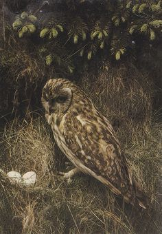 {<3} nest