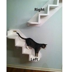 Wall Mounted Cat Stairs -- i want a set of these in white with white carpet. my kitty will love them!