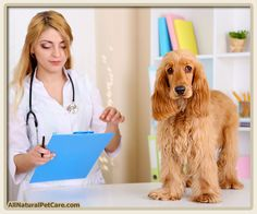 Natural Treatment and Prevention of Liver Disease in #Dogs