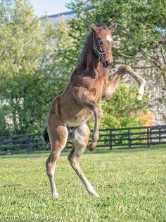 Thoroughbred colt
