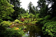 Landscape Koi Pond Algae ideas with Green water string algae control – japanese koi pond, Hi folks: below are a few articles on pond algae. Description from landscapinggallery.info. I searched for this on bing.com/images