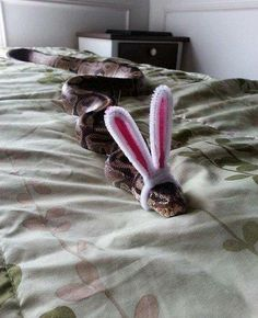 Funny pictures about Hopping Along That Bunny Trail. Oh, and cool pics about Hopping Along That Bunny Trail. Also, Hopping Along That Bunny Trail photos. Animals And Pets, Baby Animals, Funny Animals, Cute Animals, Cute Reptiles, Reptiles And Amphibians, Snakes With Hats, Baby Snakes, Serpent Animal