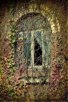 """Enjoy these 32 """"Creepy Abandoned Windows and Doors"""". It's no wonder we find these broken windows and doors creepy yet compelling. Abandoned Mansions, Abandoned Buildings, Abandoned Places, Old Windows, Windows And Doors, Creepy Old Houses, Castle Window, Garden Cabins, Old Cabins"""