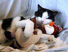 Merry Christmas, Harry the Farm cat