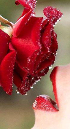 Besando la rosa.....