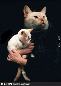 Cat face swap @Stephanie Stanko  you should do this with kitcat and send it out for christmas cards