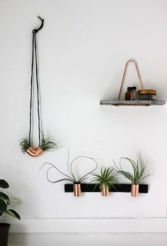 industrial style copper airplant DIY plus other ideas for hanging plants on walls.