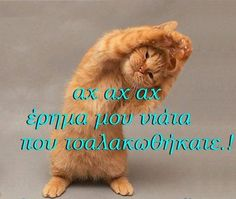 Funny Greek Quotes, Funny Quotes, Good Morning Messages, Just For Fun, Wallpaper S, Make Me Happy, Jokes, Cats, Animals