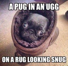 Pugs are Thugs ADVERTISEMENT Signup for your regular dose of The Funny Beaver Newsletter! Funny Animal Memes, Cute Funny Animals, Funny Animal Pictures, Cute Baby Animals, Funny Cute, The Funny, Funny Dogs, Pug Pictures, Dog Photos