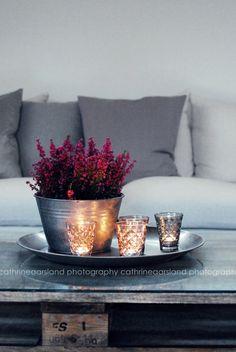 Geeft je huis in 1 klap herfstsfeer met een opvallende heideplant