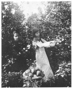 The Jaffa Orange: The Palestinian Gift to the World (4) | Before Their Diaspora