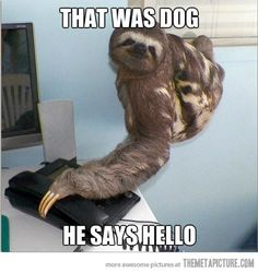Google Image Result for http://2.bp.blogspot.com/-BKwUkC-ZnFE/T7UEg8-d_PI/AAAAAAAAAQs/puJu-G0J6p0/s1600/funny-sloth-talking-phone.jpg