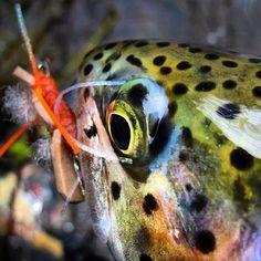 Rainbow trout. Favorite fish to catch. So pretty