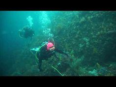 伊豆熱海のダイビングは中性浮力を練習しながらソフトコーラルを楽しむ