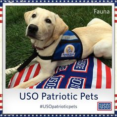 Meet Fauna, an advocate for our troops and a service puppy in training. Do you know or have a service dog that supports our military?