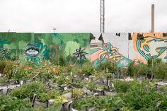 https://flic.kr/p/cNKoqJ | Urban Farming, Sompasaari, Helsinki