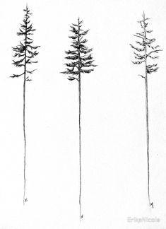 Skinny tree studies in graphite. Love the PNW. Buy this artwork on apparel stickers phone cases and more. Body Art Tattoos, New Tattoos, Small Tattoos, Tattoos For Guys, Tatoos, Kiefer Tattoo, Skinny Tree, Pine Tree Tattoo, Tree Tattoo Back