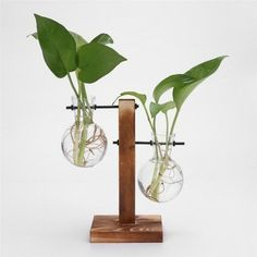 These adorable Hydroponic plant tripod stands are ideal for propagating your plant cuttings while allowing you to observe the roots as they grow. Circular glass bulb vases allow for shorter plants (such as vines) with longer root systems to propagate in an aesthetically pleasing stand that will look nice on any shelf! The glass bulbs create a distinct look and separation of your plants. Perfect for any decorative addition to a kitchen window, bedroom, bathroom, or office. Makes a great gift for Hanging Flower Pots, Hanging Planters, Flower Vases, Hanging Terrarium, Bud Vases, Glass Planter, Wood Planters, Glass Vase, Bottle Vase
