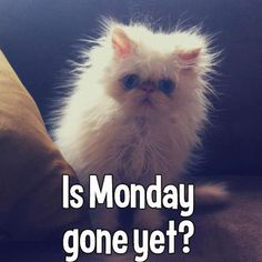Is monday gone yet monday monday quotes happy monday monday humor funny monday quotes monday quote