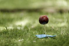 cherry fruit grass nature green