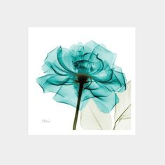Exquisite Floral X-Ray Art Prints By Albert Koetsier